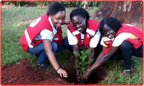 Tree planting at one of the schools in Jinja